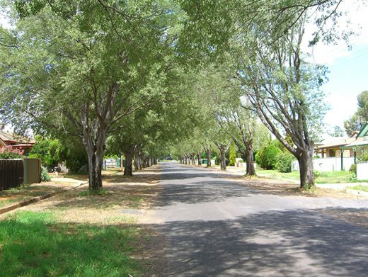 Tree lined lane in small town Central West NSW