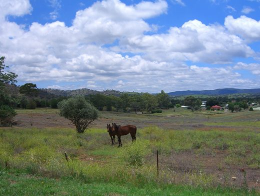 Paddock with two brown horses mountains in background Morabool Central West NSW