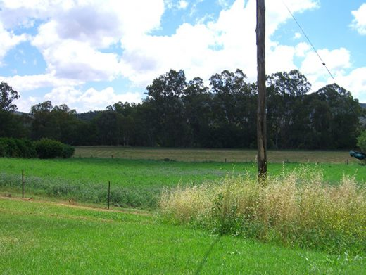 Country paddock green grass telegraph pole Central West NSW